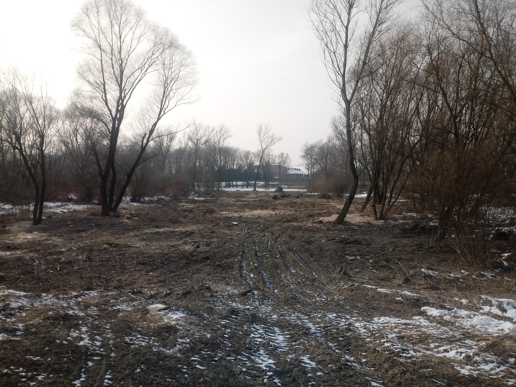 Na zdjęciu: wycięte drzewa na Kamieńcu, gdzie ma powstać Park Pojednania Narodów W tle Muzeum Auschwitz.